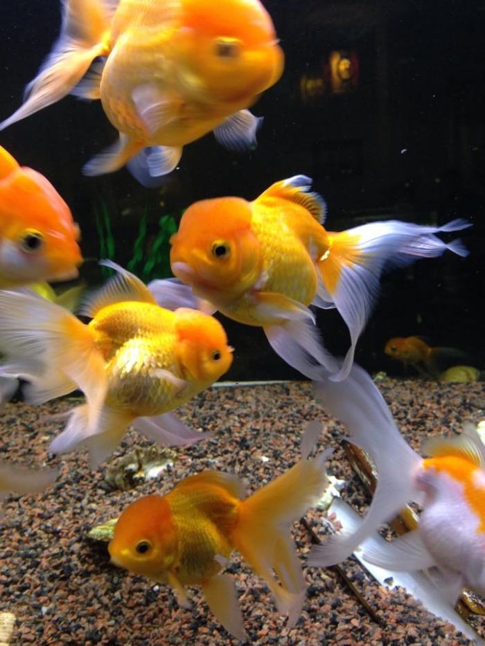 Hvilken fisk er dette?